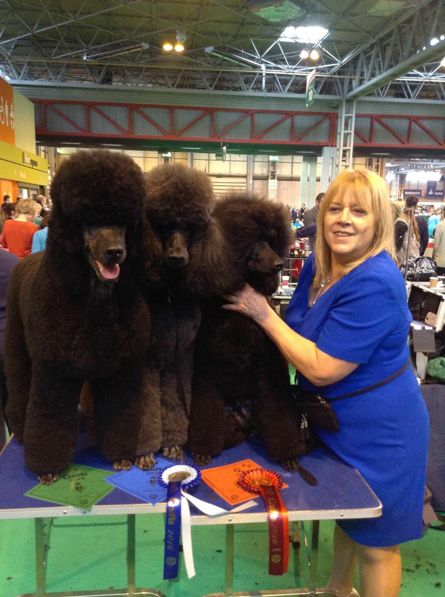 Crufts trio 2016